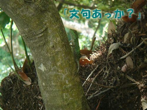 9~20100610~68_R-b69f7.jpg